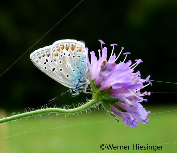 Naturpark Schwarzwald Fotowettbewerb