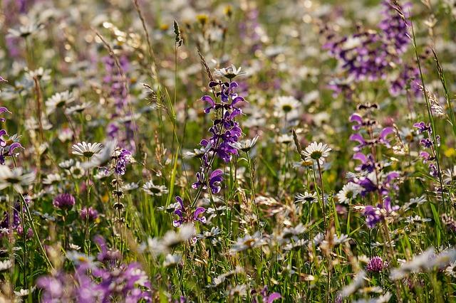 Blühende Wildblumen in Naturparke