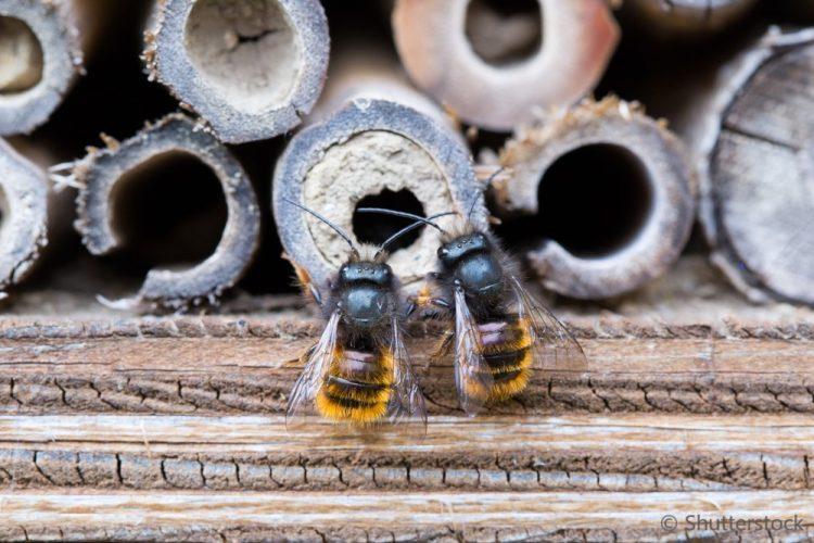 Wildbienennisthilfe Insektenhotel
