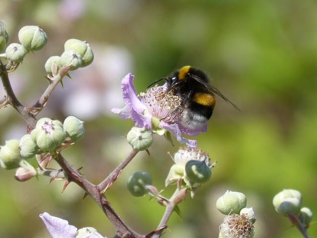 Naturpark für Insektenvielfalt