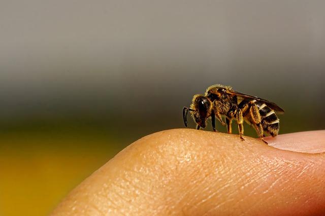 Stechen Wildbienen?