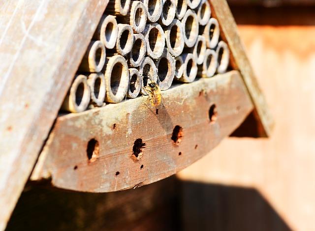 Wildbienennisthilfe aufstellen