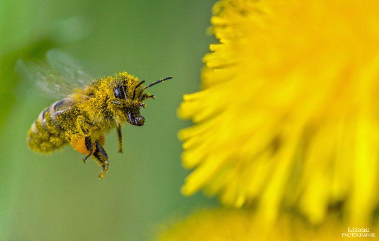 Biene Bilanz Blühende Naturparke