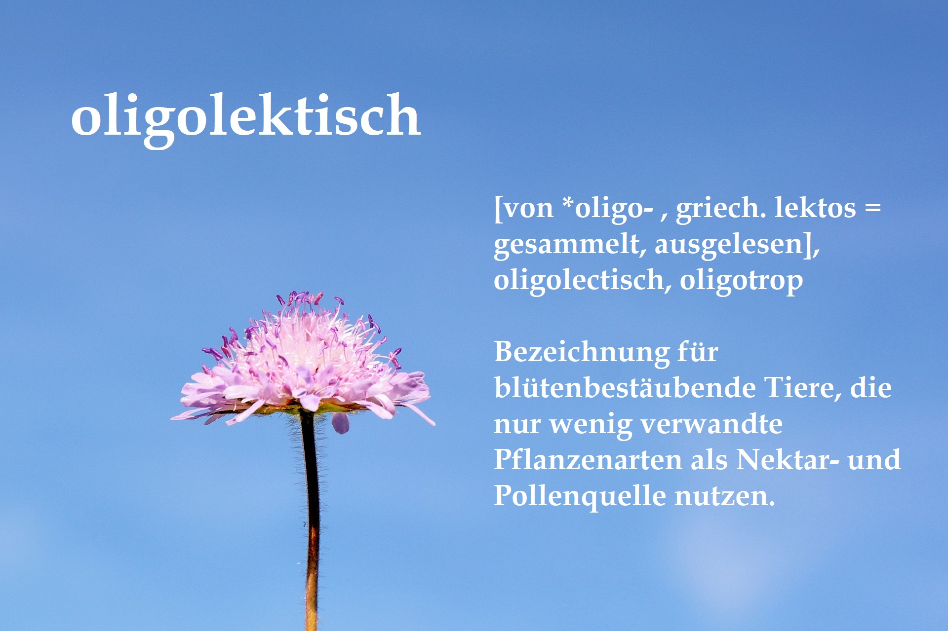 Definition oligolectisch