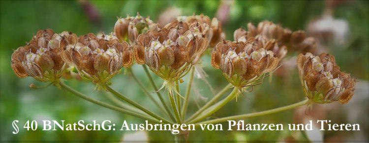 Ausbringen von Pflanzen